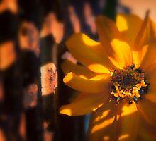 Autumn Shadows by KellyHeaton