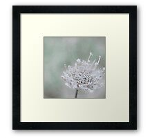 Winter's Sweet Fury Brings the Promise of Spring Framed Print