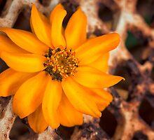 Rusty Golden Yellow Flower by KellyHeaton