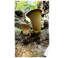 Fungus Cups Poster