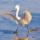 A Dancing Snowy Egret by Jeff Ore