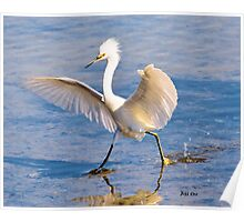 A Dancing Snowy Egret Poster