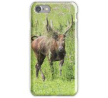 Père David's Deer iPhone Case/Skin