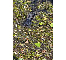 Florida Swamp Photographic Print
