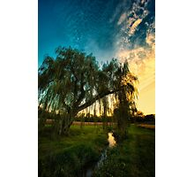 Weeping Willow Tree Sunset Photographic Print