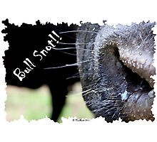 Bull Snot!! - Not just an exclamation anymore! Photographic Print