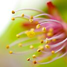 Cherry Stamens and Pistil by Gary Chapple