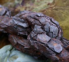 Rusty Chain, Outer Harbour  by Scott Schrapel