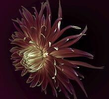 Petals in the wind by EbyArts