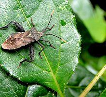 A bug's life... by remojbardi
