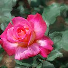 Painted Rose by Don Wright