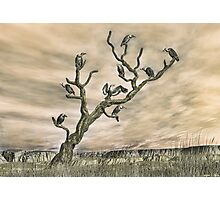 The Roost Photographic Print