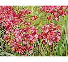 Red Flametree Bundle Close-up Photographic Print