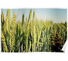 Wandina's Wheat Poster