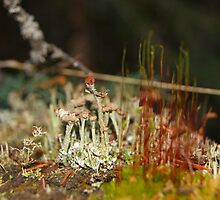 Miniature Ecosystems by Barrie Daniels