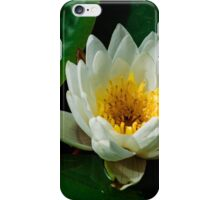 Pure white lily pad flower iPhone Case/Skin