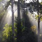 Tasmanian bush sunbeams  by gaylene
