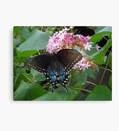 Black Eastern Swallowtail - Summer's End Canvas Print