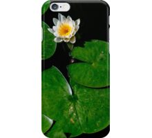 Blooming White lily pad flower iPhone Case/Skin