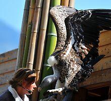 Vulture by neil harrison