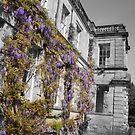 Kidbrooke  Park Wisteria Blush by Andy Mays