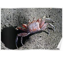 small crab Poster