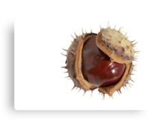 Chesnut Canvas Print