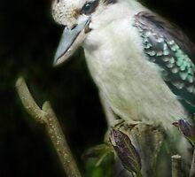 Kookaburra by Catherine Hamilton-Veal  ©