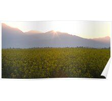 Sunrise bursting over the kamnik alps and rapeseed Poster