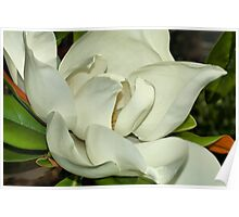 Pure White Fragrant Beauty Poster