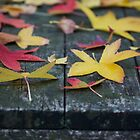 Autumn leaves resting by normanorly