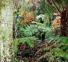 Lush Greenery by Malcolm Clark