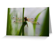 Dragonfly - Four-spotted Chaser Greeting Card
