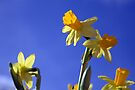 Spring in the Air by Jo Nijenhuis