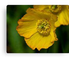 Yellow Poppy Flower Canvas Print