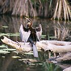 Cormorant - Arnhem Land Northern Territory by Steve Bass