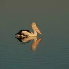 Pelican - Tin Can Bay Queensland by Steve Bass