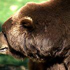 Bear by Andreas  Berheide
