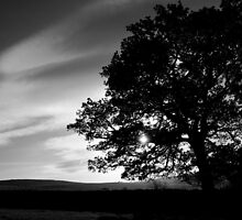 Oak Tree Silhouette by mooseshooz