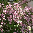May beautiful May.... by Ana Belaj