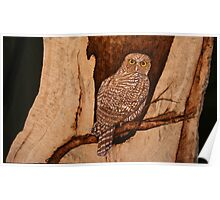 The Australian Powerful Owl Poster