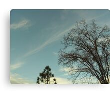 The Trees And The Sky Canvas Print