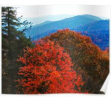 AUTUMN ALONG NEWFOUND GAP ROAD Poster