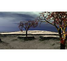 The Last Monkey Puzzle Trees Photographic Print