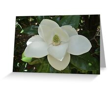 Southern Magnolia Flower Greeting Card