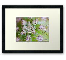 Super Macro of Cactus spines. Framed Print