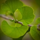 Gingko Leaves by Joye Ardyn  Durham