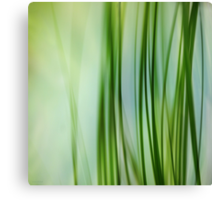 Vertical Grasses Canvas Print