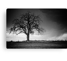 The Tree Of Life B&W Canvas Print