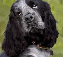 Cocker Spaniel - Bertie by Sarahbob